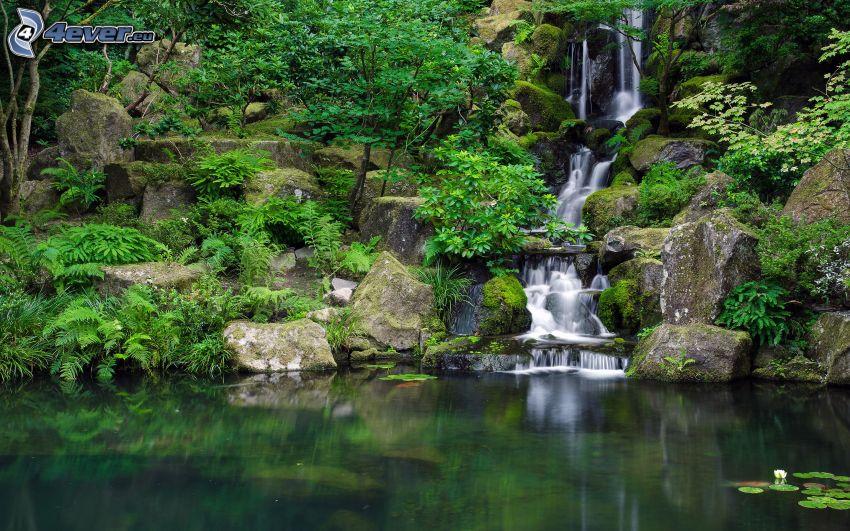 laghetto nella foresta, cascata, verde, rocce