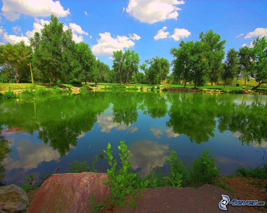 lago, alberi, riflessione, parco