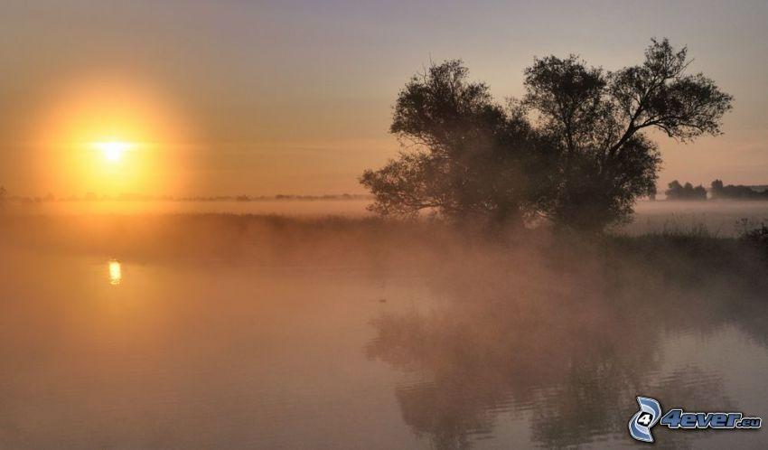 lago, albero solitario, nebbia a pochi centimetri dal terreno, levata del sole