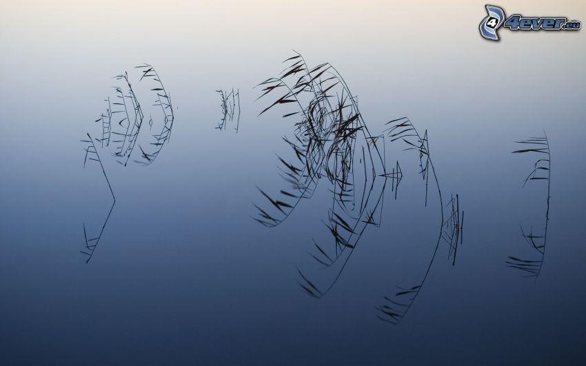 lago, l'erba, riflessione