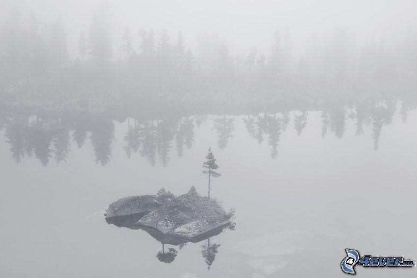 lago, piccola isola, alberi di conifere, nebbia