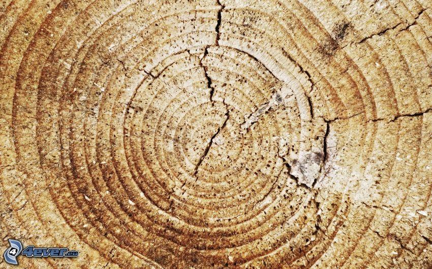 legno, anelli di accrescimento annuale, crepa