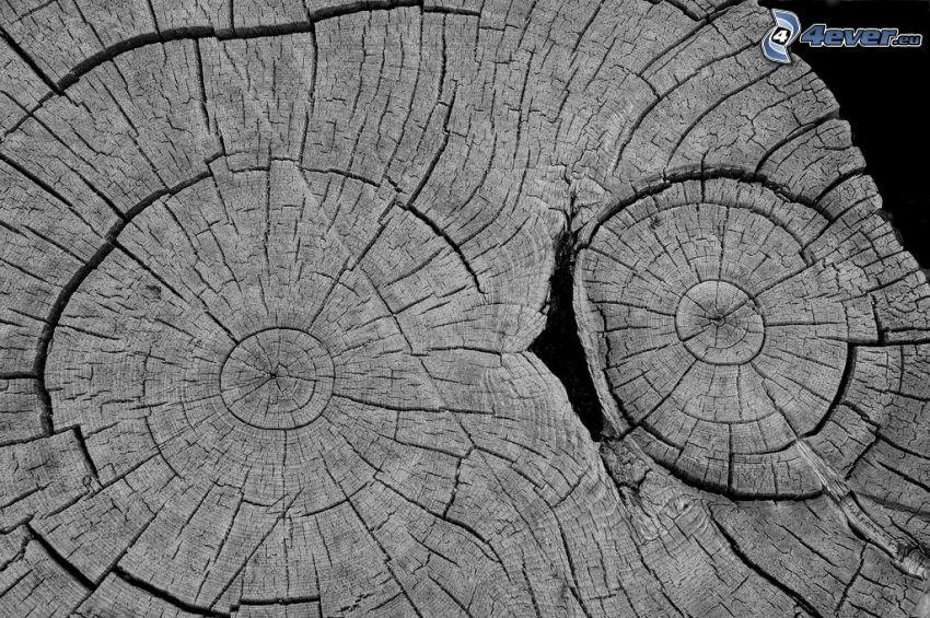 legno, crepa