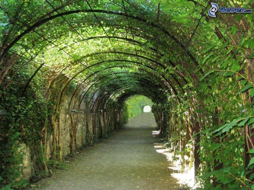 marciapiede, tunnel verde, foglie verdi