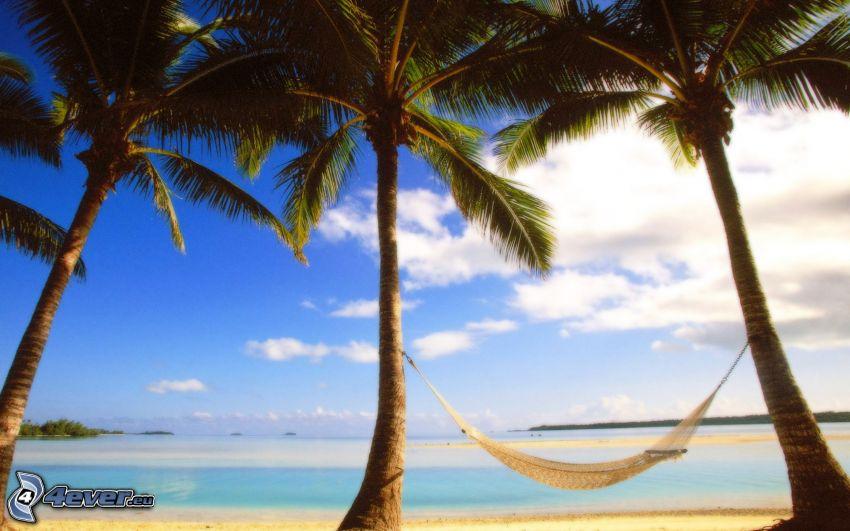 amaca, palme sulla spiaggia, mare