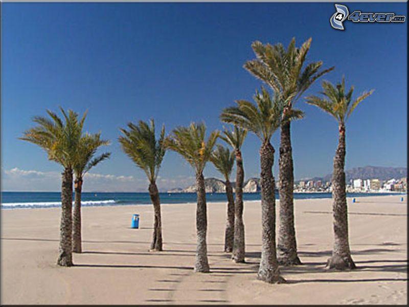 Benidorm, Spagna, palme sulla spiaggia, mare