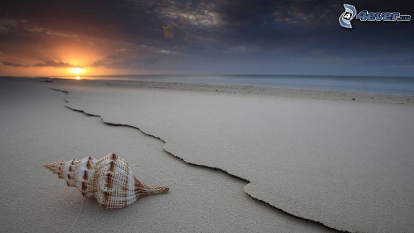 conchiglia, tramonto sopra la spiaggia