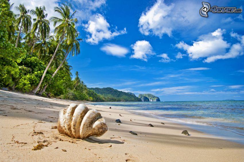 conchiglia sulla spiaggia, spiaggia sabbiosa, mare, palme
