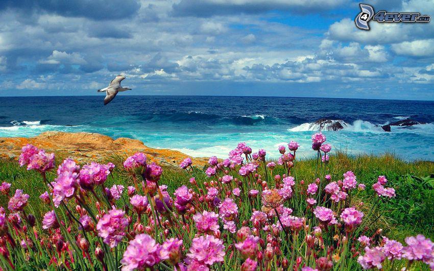 fiori rossi, gabbiano, mare