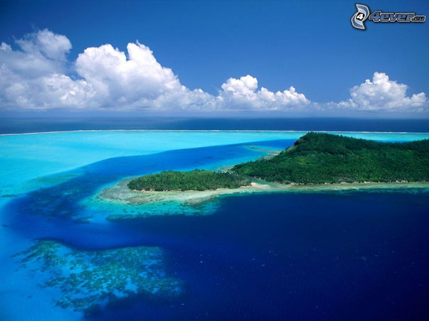 isola, mare azzurro, giungla