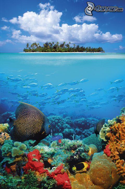 isola tropicale, acqua, coralli, pesci