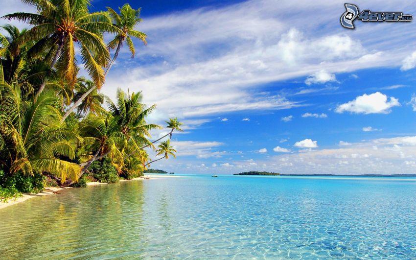 isola tropicale, mare azzurro poco profondo, palme, nuvole