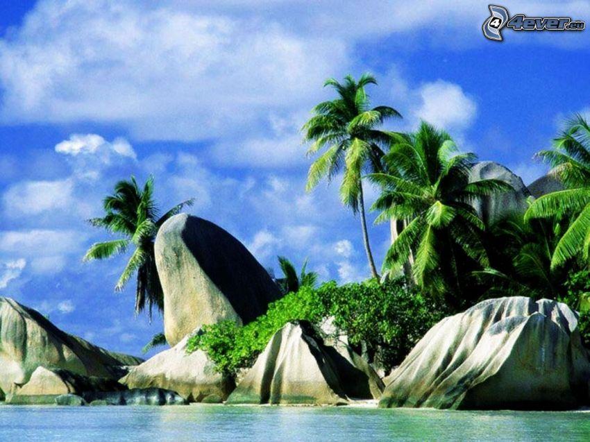 La Digue, Seychelles, palme, mare, costa, rocce