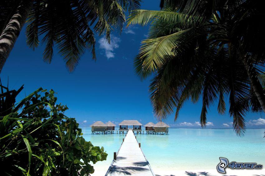 Maldive, palme, molo di legno, mare