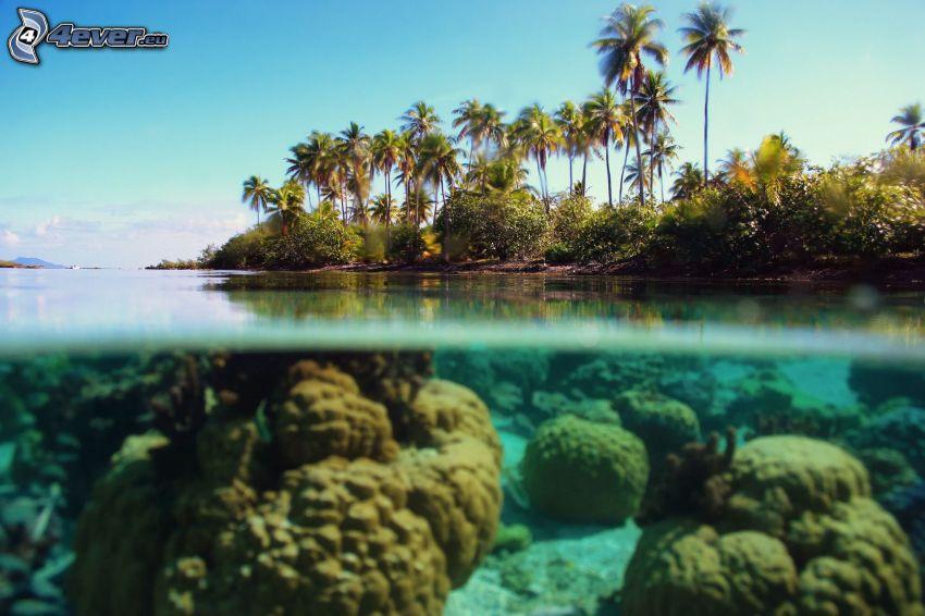mare azzurro poco profondo, palme, fondale marino