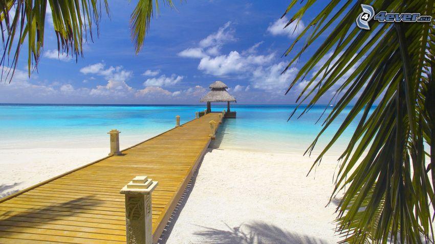 molo di legno, mare, palme