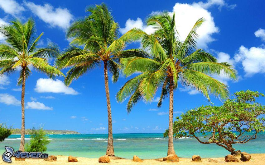 palme sulla spiaggia, mare, nuvole