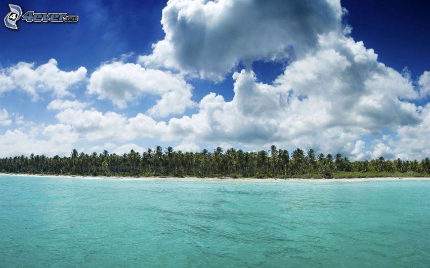 spiaggia, palme, mare, nuvole