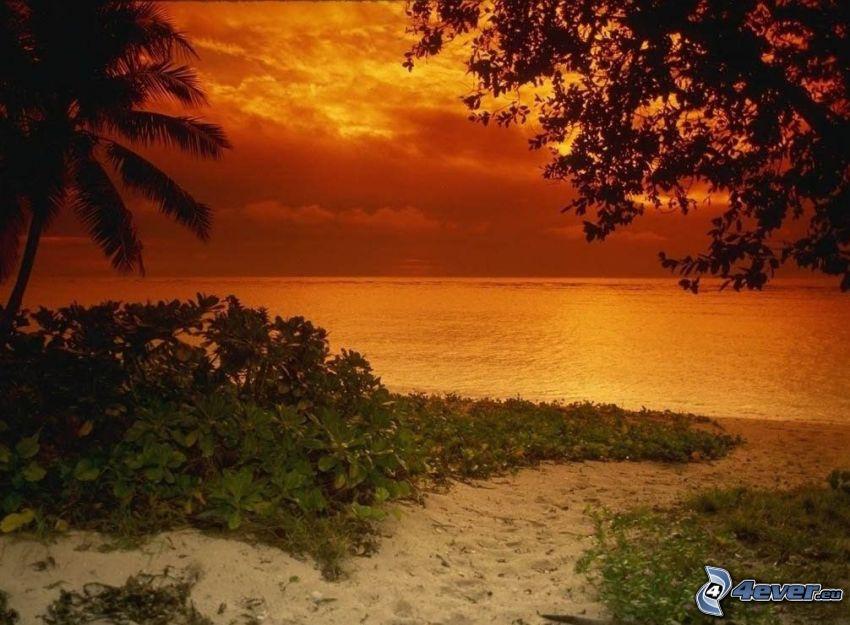 spiaggia dopo il tramonto, spiaggia sabbiosa, mare, cielo arancione