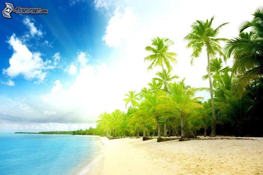 spiaggia sabbiosa, palme sulla spiaggia, mare