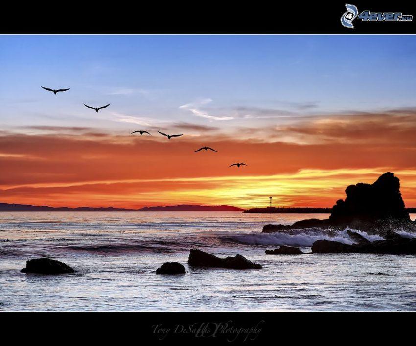 tramonto sopra il mare, cielo arancione, uccelli, rocce nel mare