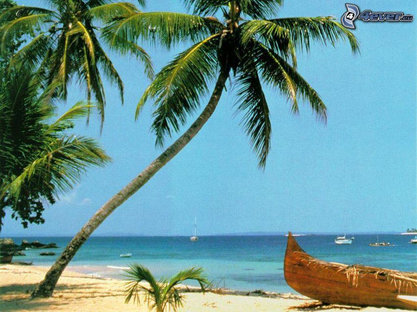 vecchia barca sulla spiaggia, palma, mare, sabbia