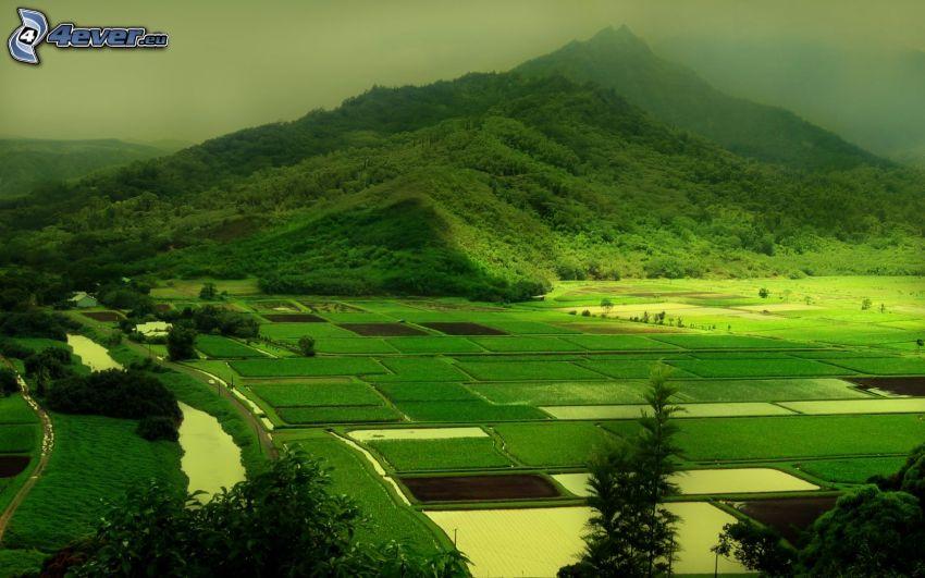 montagna, campi