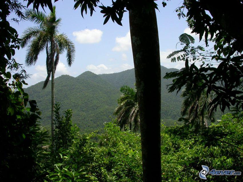 montagne, palme, foresta