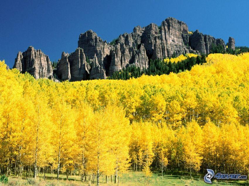 Aspen, Colorado, bosco giallo d'autunno, rocce