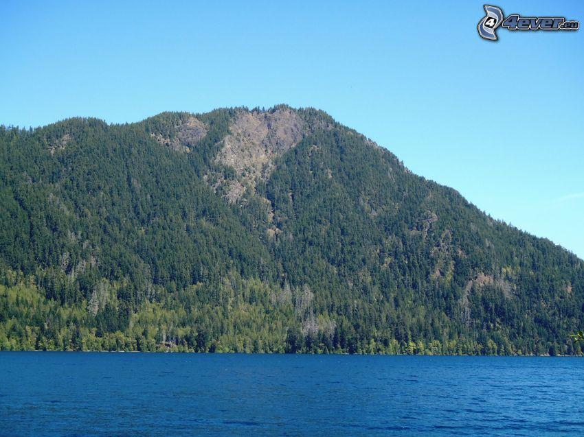 collina, bosco di conifere, il fiume