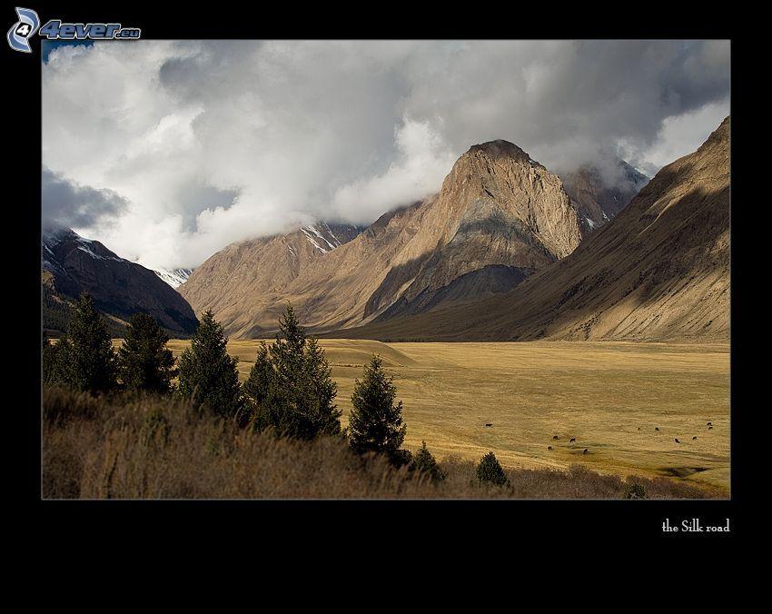 colline, montagne, nuvole, alberi di conifere