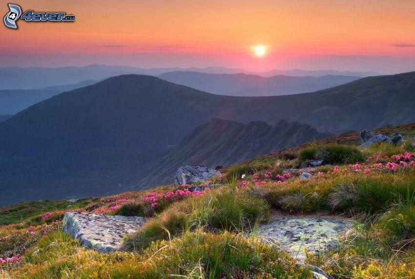 la vista del paesaggio, colline, cielo rosa, fiori rossi, tramonto in montagna