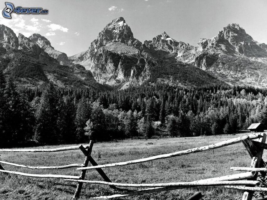 montagne rocciose, bosco di conifere, vecchio recinto di legno, bianco e nero