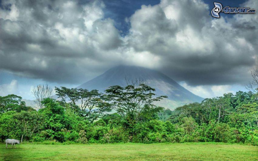 monte Fuji, collina, giungla, nuvole