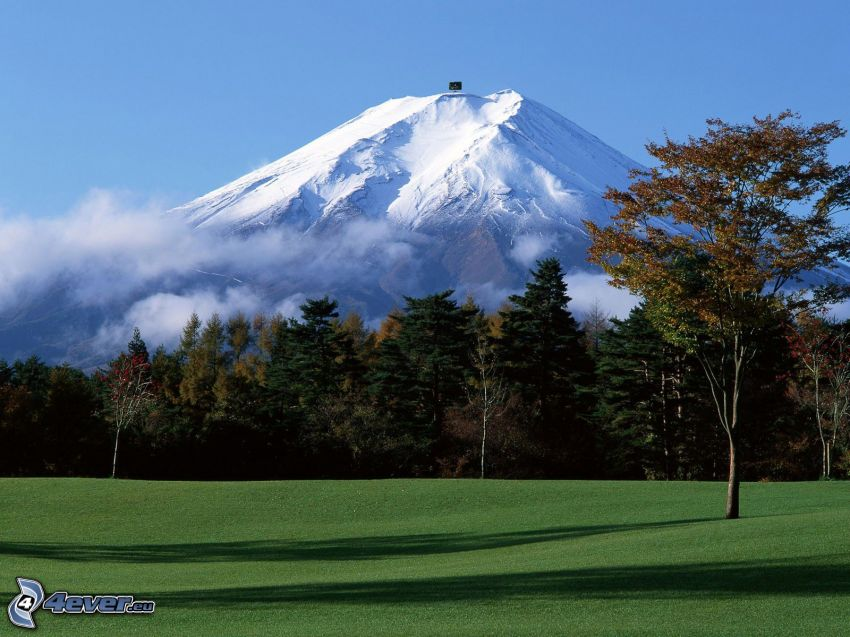 monte Fuji, montagna innevata, foresta, alberi, prato