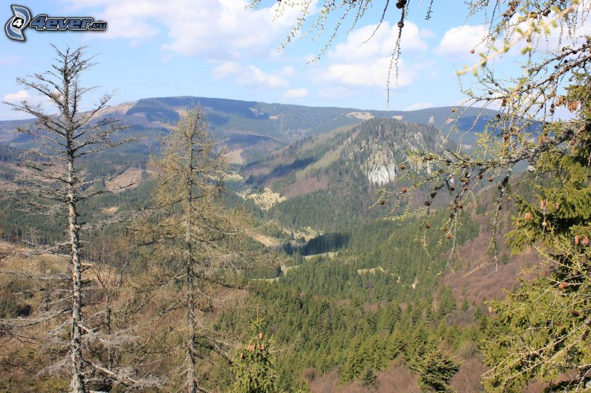Monti Metalliferi Slovacchi, vista della valle, Malá Stožka, montagna, alberi, bosco di conifere