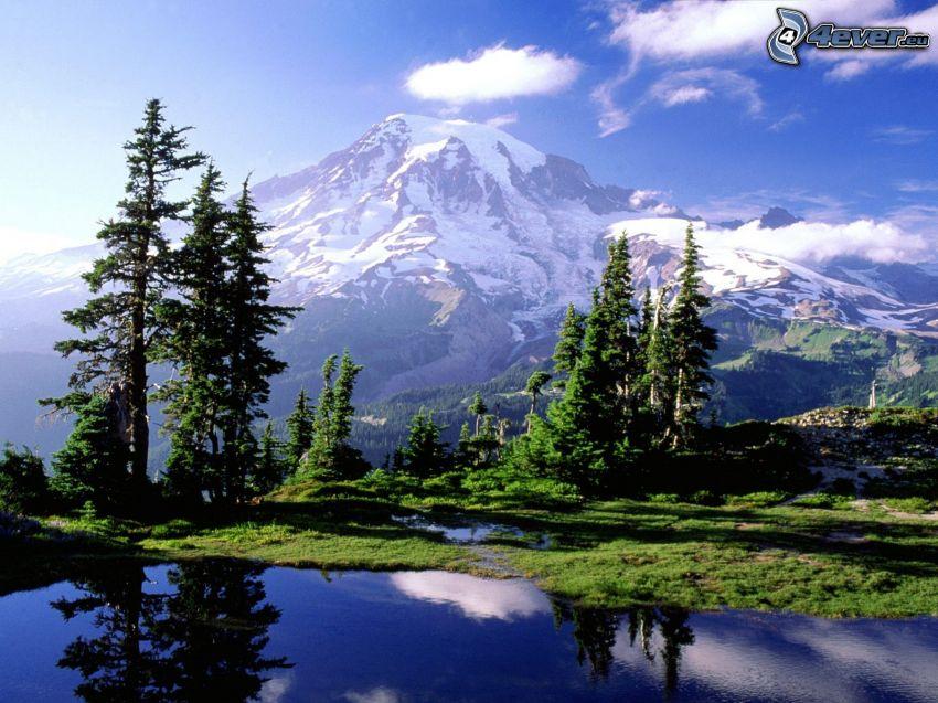 Mount Rainier, vulcano, lago di montagna, alberi di conifere, riflessione