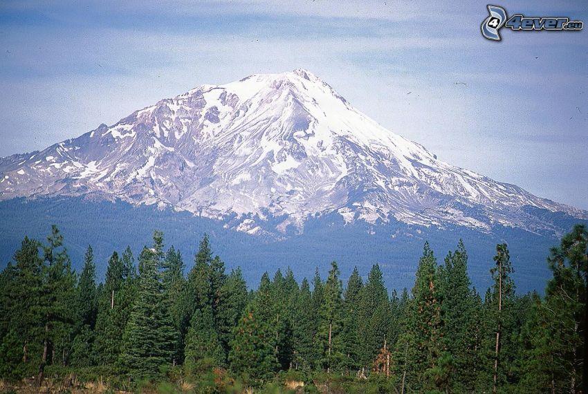 Mount Shasta, montagna innevata, foresta