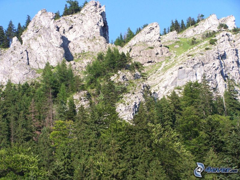 natura, montagne, foresta