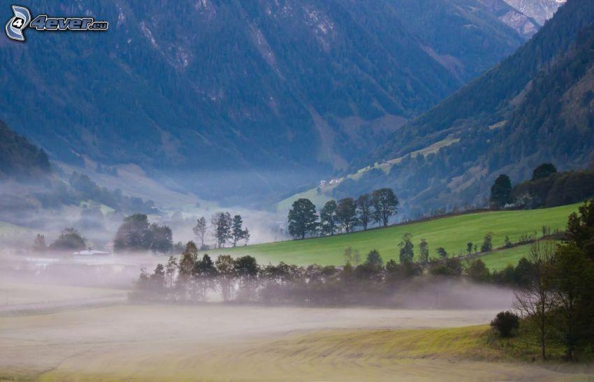 nebbia a pochi centimetri dal terreno, alberi, montagne