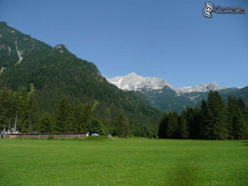 Totes Gebirge, prato, bosco di conifere, montagna rocciosa