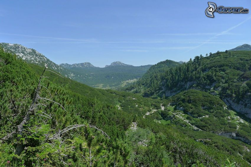 Totes Gebirge, verde, valli