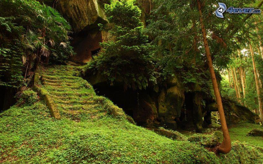 natura, foresta, vecchie scale, muschio