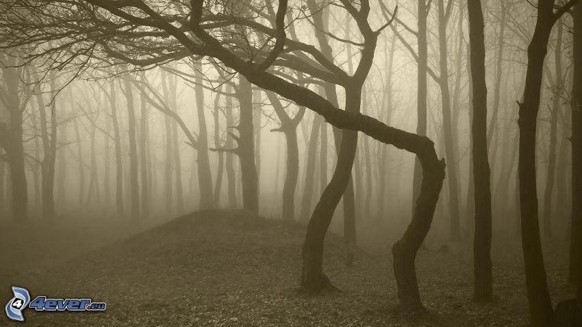nebbia nella foresta, color seppia