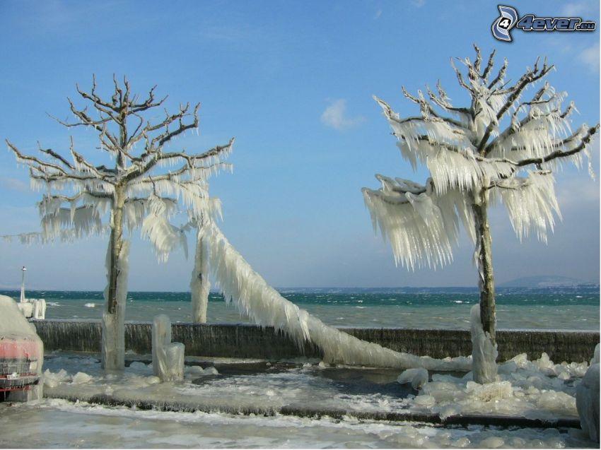 alberi congelati, lungomare, inverno