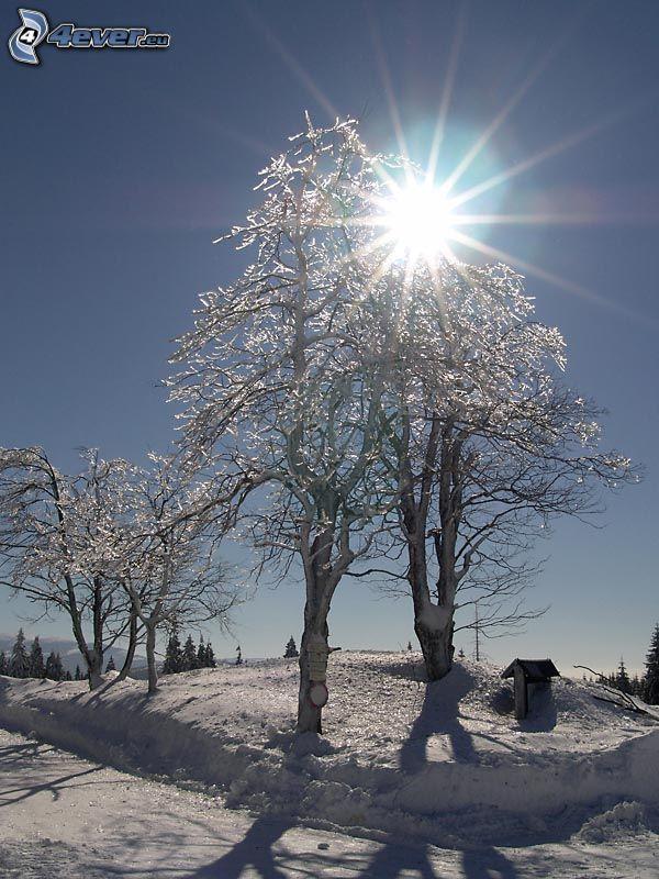 alberi congelati, paesaggio invernale, sole, raggi del sole, neve, inverno
