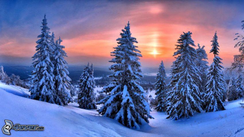 alberi coperti di neve, cielo viola