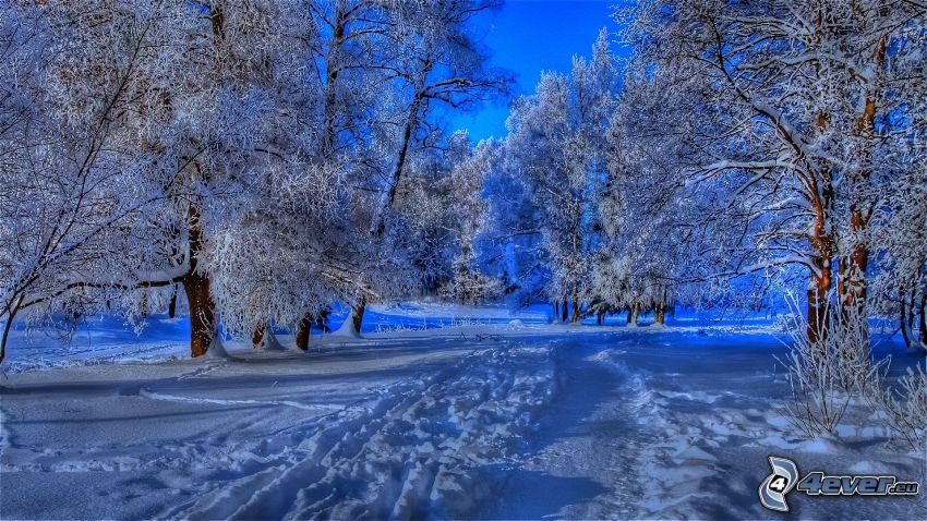 alberi coperti di neve, tracce nella neve