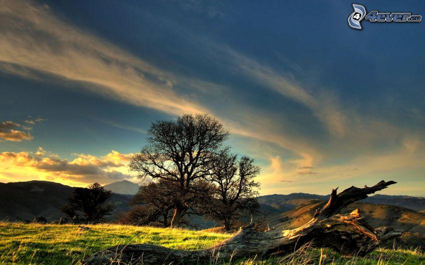 alberi solitari, ceppo secco