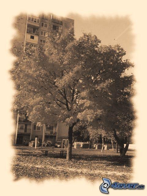 albero, blocco di appartamenti, foto in bianco e nero